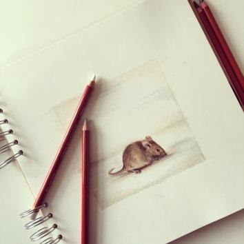 door mouse drawing colour pencil Casey Allum artist