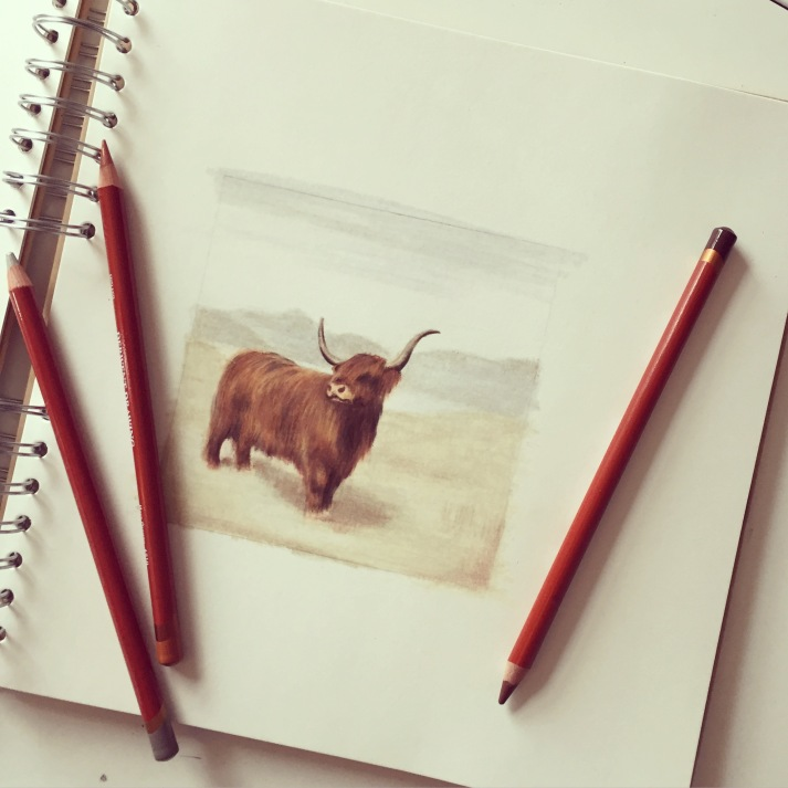highland cow drawing colour pencil Casey Allum artist