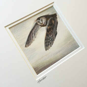 owl drawing sketch Casey Allum artist