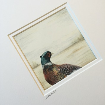 pheasant drawing colour pencil Casey Allum artist