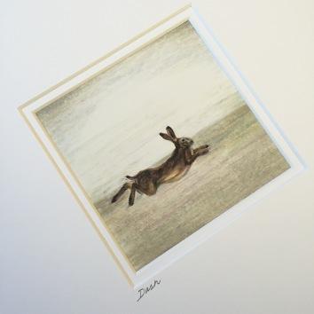 hare running drawing Casey Allum artist