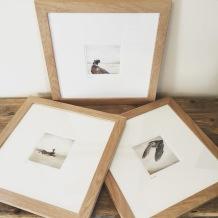 drawings pheasant owl hare sketch Casey Allum artist