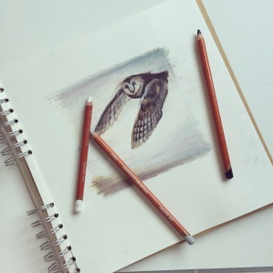 owl drawing Casey Allum artist