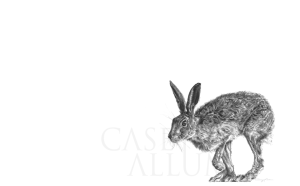 Pencil Hare Drawing Print