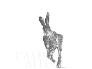 Pencil Running Hare Drawing Print