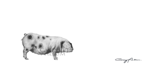 Pencil Pig Drawing Print