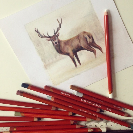 stag drawing Casey Allum artist