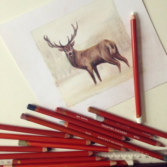 stag drawing Casey Allum artist