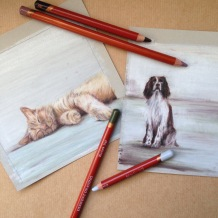 spaniel ginger cat drawing art artist Casey Allum