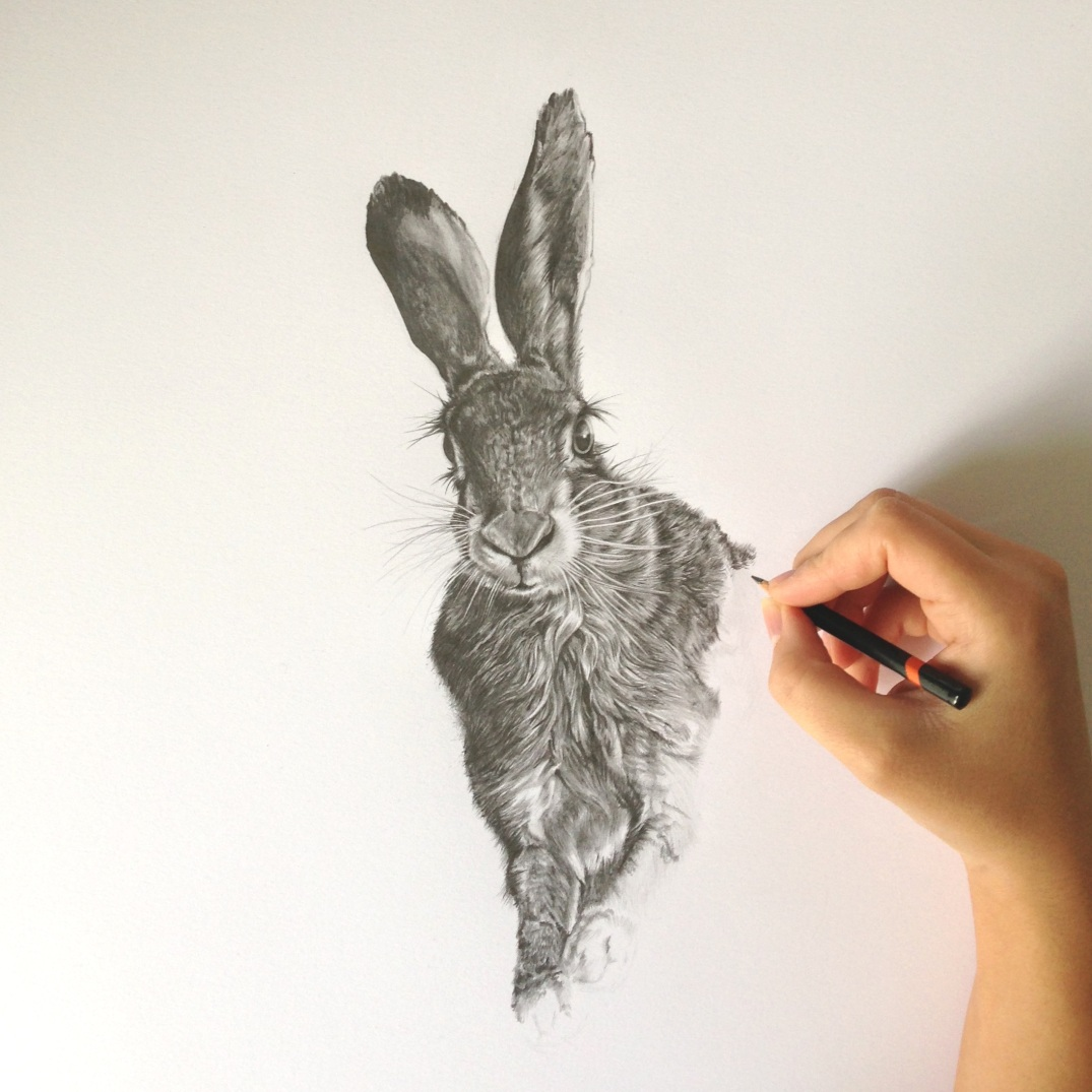 Hare in Progress