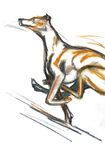 whippet sketch