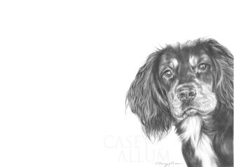 working cocker spaniel pencil drawing pet portrait Casey Allum artist