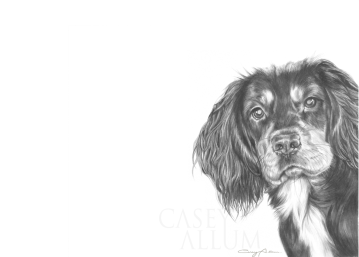 working cocker spaniel pencil drawing pet portrait Casey Allum artist