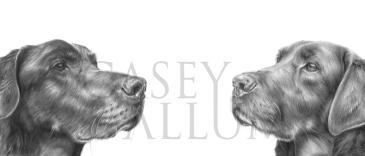 brown labrador pencil drawing pet portrait dog Casey Allum artist