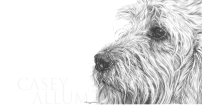 labradoodle drawing dog portrait in pencil
