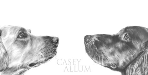yellow labrador flat coat retreiver pencil drawing pet portrait dog Casey Allum
