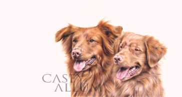 nova scotia duck tolling retriever portrait dog pencil drawing Casey Allum