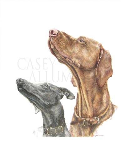 whippet hungarian vizsla dog portrait colour pencil
