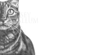 Pencil Cat Drawing Print