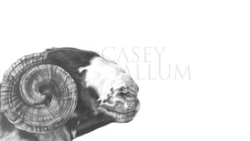 rough fell ram portrait in pencil Casey Allum