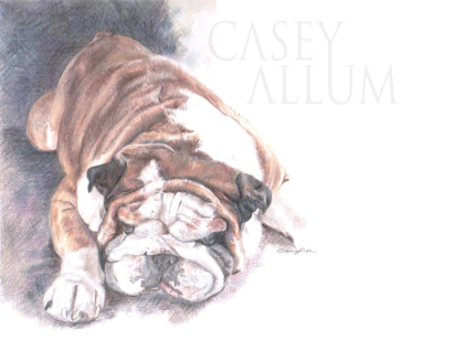 british bulldog portrait colour pencil
