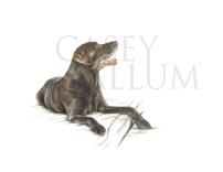 chocolate labrador pencil drawing pet portrait