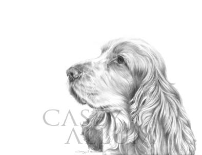 cocker spaniel pencil drawing dog portrait Casey Allum