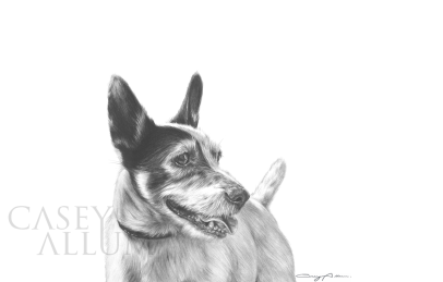 jack russell drawing dog portrait pencil