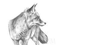 Pencil Fox Drawing Print