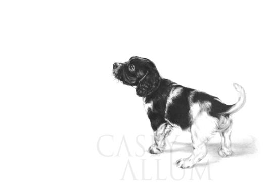 springer spaniel puppy portrait pencil drawing dog Casey Allum artist