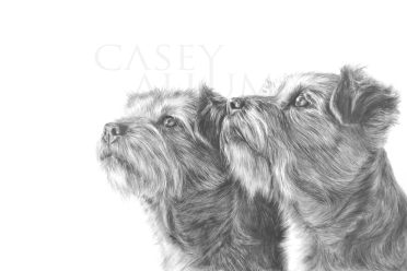 border terrier pencil drawing pet portrait dog Casey Allum artist