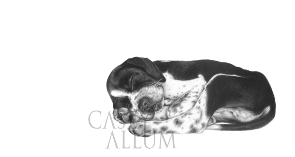 shorthaired pointer pencil drawing pet portrait dog Casey Allum artist
