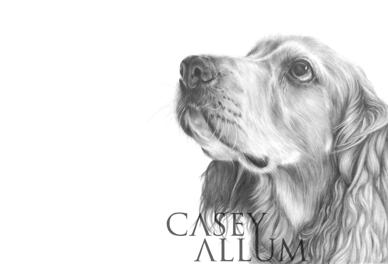 working cocker spaniel pet portrait dog Casey Allum artist