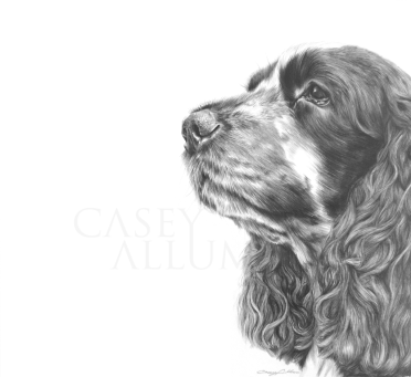 cocker spaniel pencil drawing dog portrait Casey Allum
