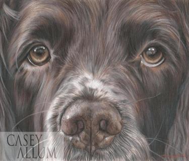 springer spaniel colour drawing pet portrait dog Casey Allum