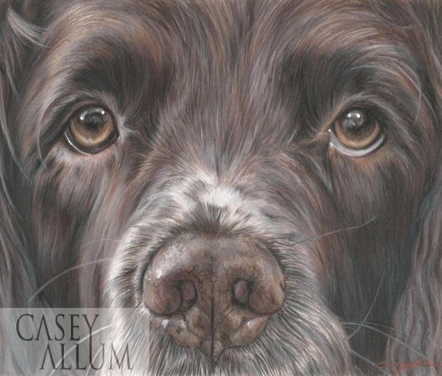 springer spaniel colour drawing pet portrait dog Casey Allum